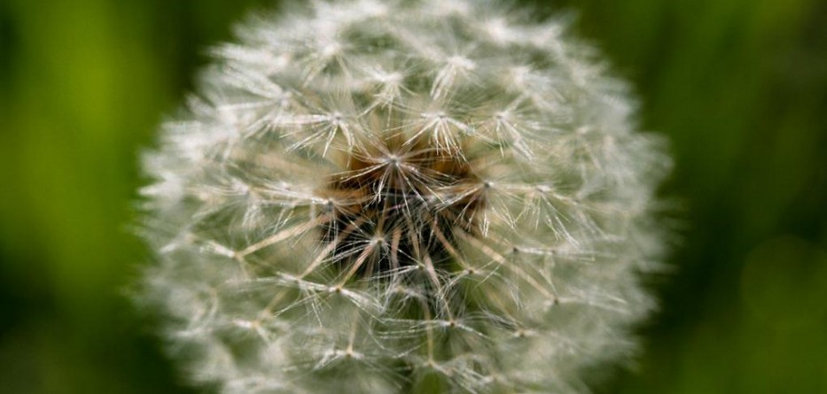 new-site-allergies