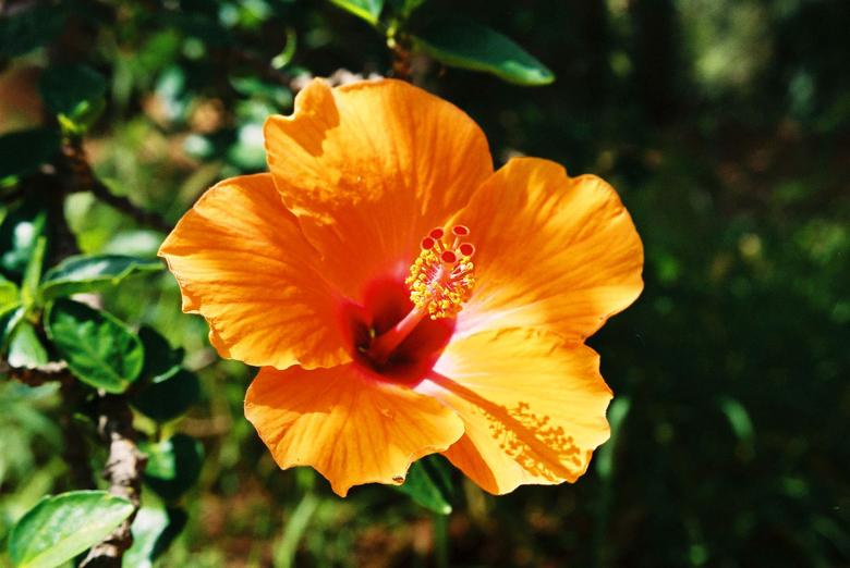 plants-sicily-bjs-2