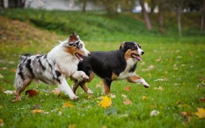 5-Fun-Dog-Exercises