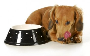 Food-You-Should-Never-Feed-Your-Dog