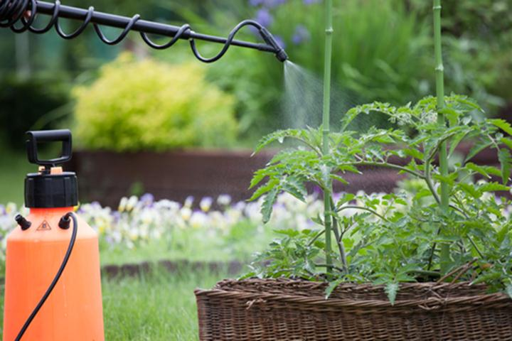 How-to-Keep-Your-Yard-Safe-Without-Chemicals1