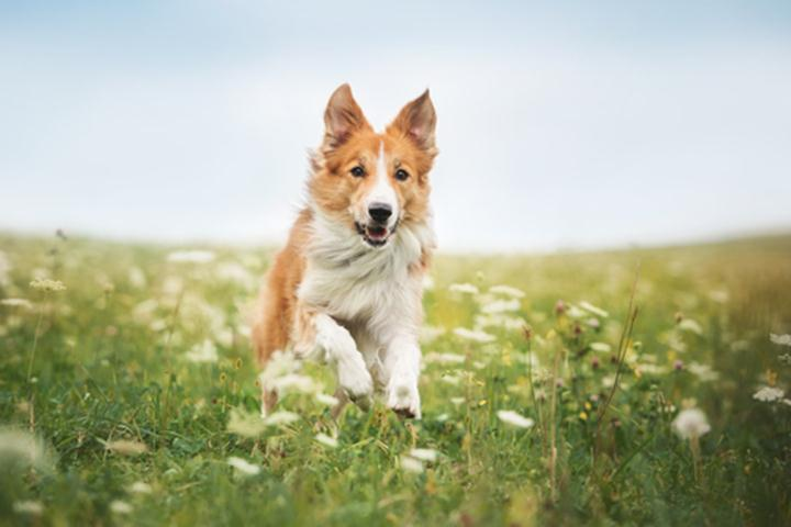 Make-Sure-Your-Pets-Get-Insurance-Protection