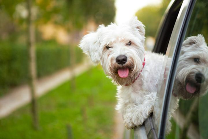 Ways-To-Make-A-Road-Trip-With-Your-Dog-Easier