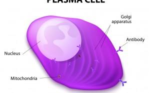 Pomalidomide multiple myeloma Treatment