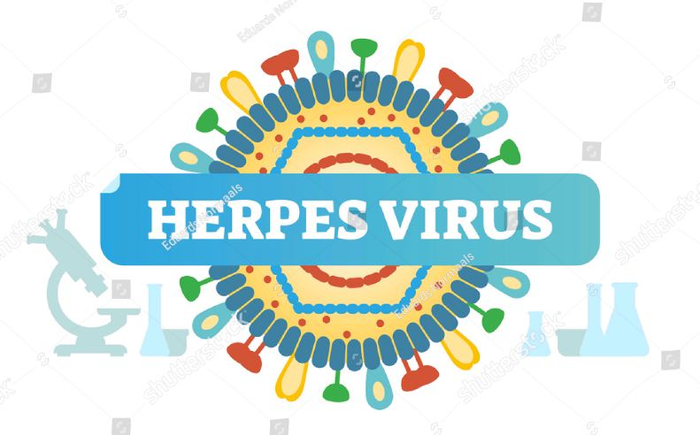 Basic Facts On Genital Herpes